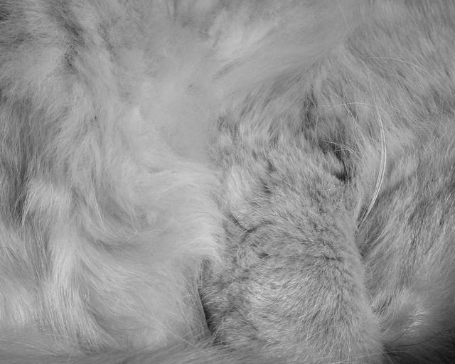 Sundance Fur in B&W