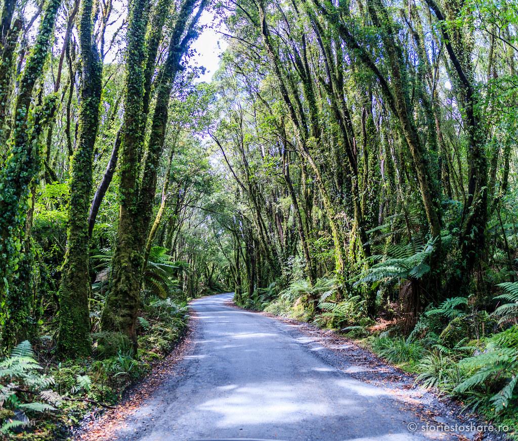 storiestoshare_newzealand