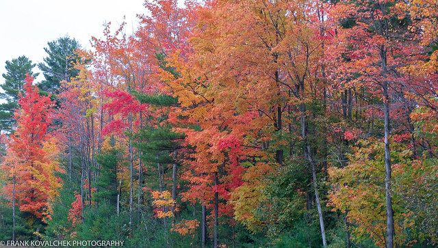 Fall foliage on the way to Montreal