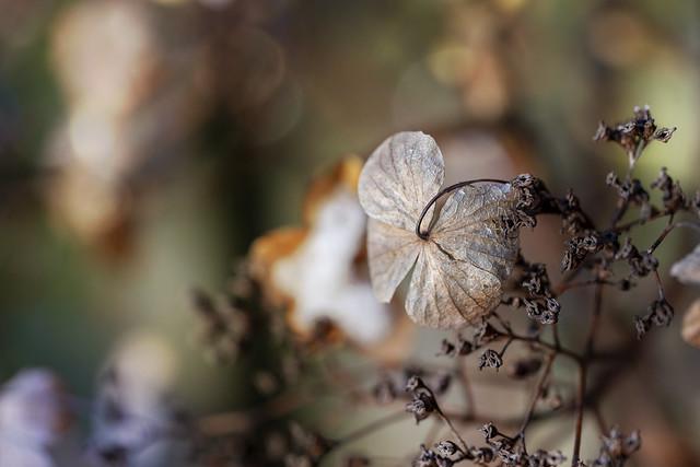 Winter decay,...
