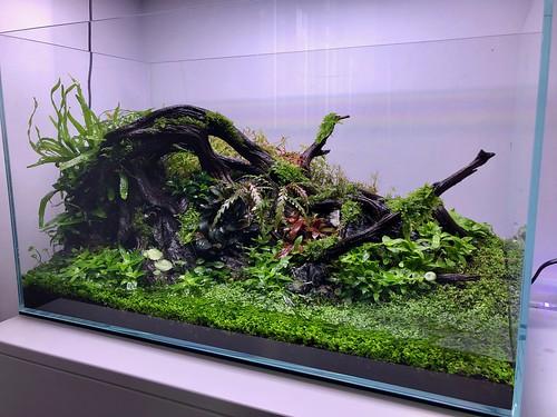 IMG_2031   by Aquazeitgeist