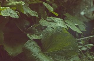 Un rullino che ha preso luce | by toscano libero