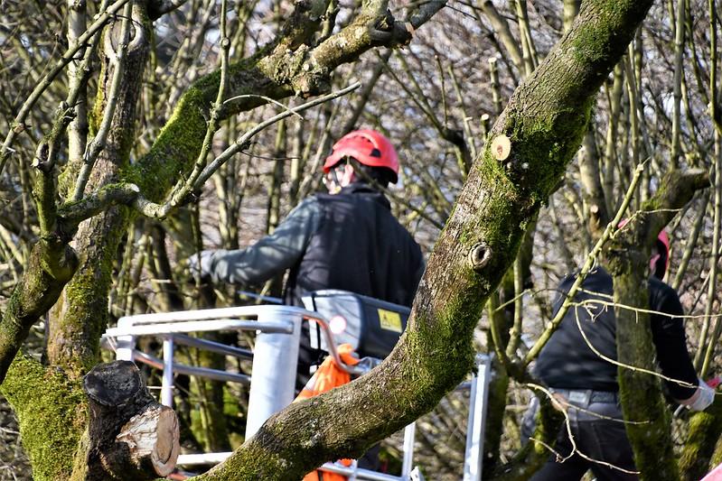 Cutting Trees 19.02 (1)