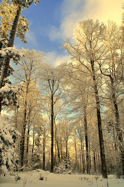 Par une belle journée d'hiver...
