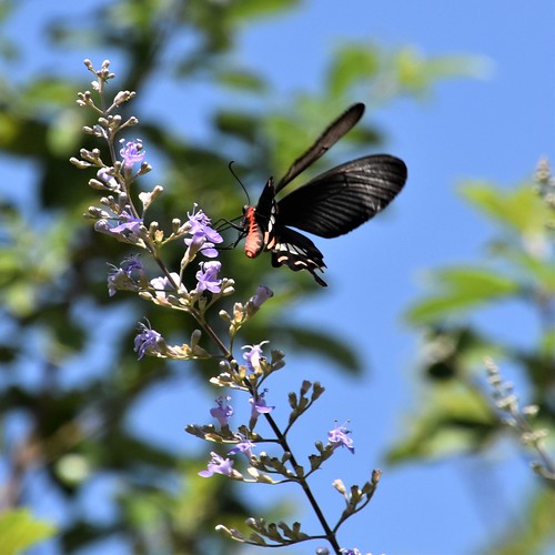 Butterfly in Goa | by Atli Harðarson