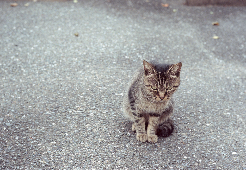 a cat sits on the paved road