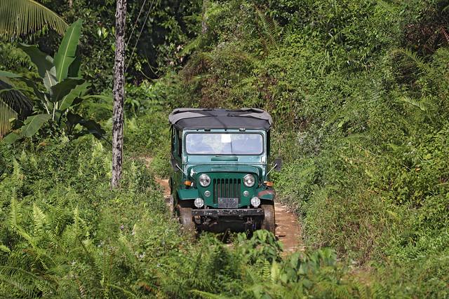 Jeep in dense jungle