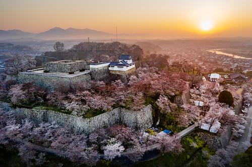 桜 鶴山公園 夜明け 朝日 津山市 岡山県 日本 jp