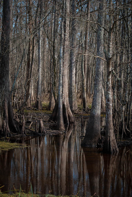 Swamp on a January Afternoon