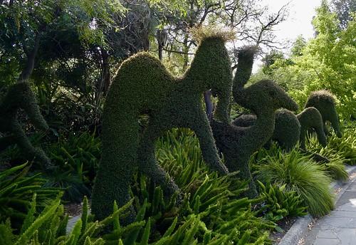 topiary melbournebotanicgardens melbourne victoria australia