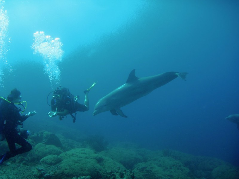 Curacao 2009-2010 Diving Disk 1 438