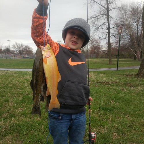 Photo of Young boy holding his stringer of trout