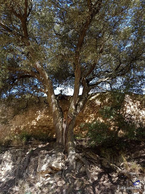 Por los montes de Herrera y el Yermo Camaldulense 21