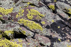 Lichens - - Wind Cave National Park, SD/06