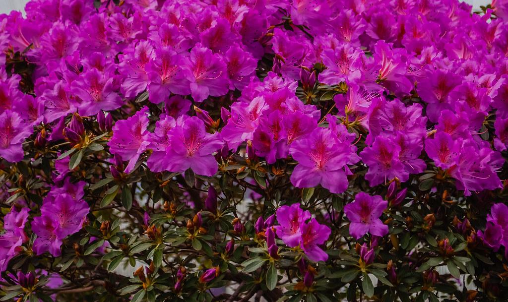 Beautiful floral displays.