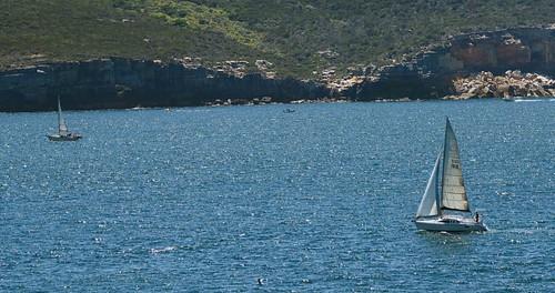 watsonsbay nsw sydney australia boat