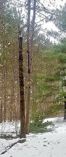 tree poppedoff