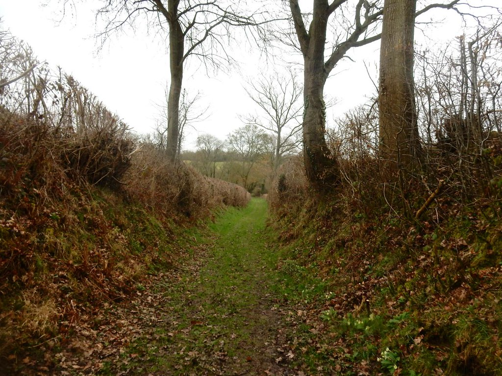 Between hedges Robertsbridge circular
