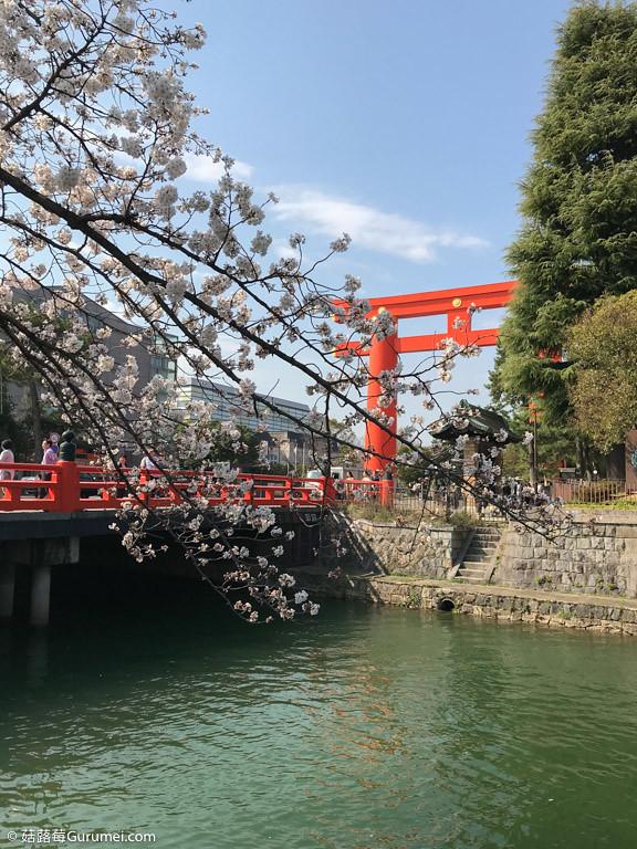 打工度假-京都生活-賞花、野餐-015