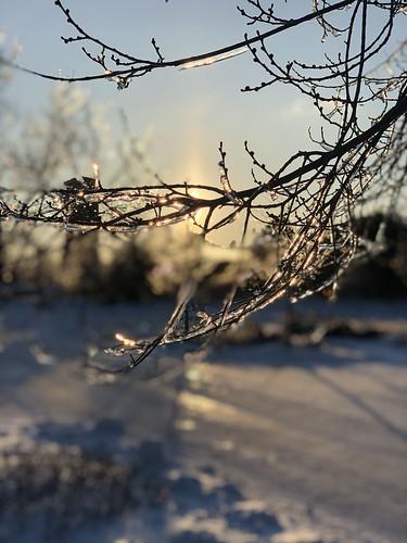 morning dawn sunrise freezingrain ice tree illinois chicago iphonex