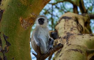 mono macaco | by Bidaiariyoutubechanel