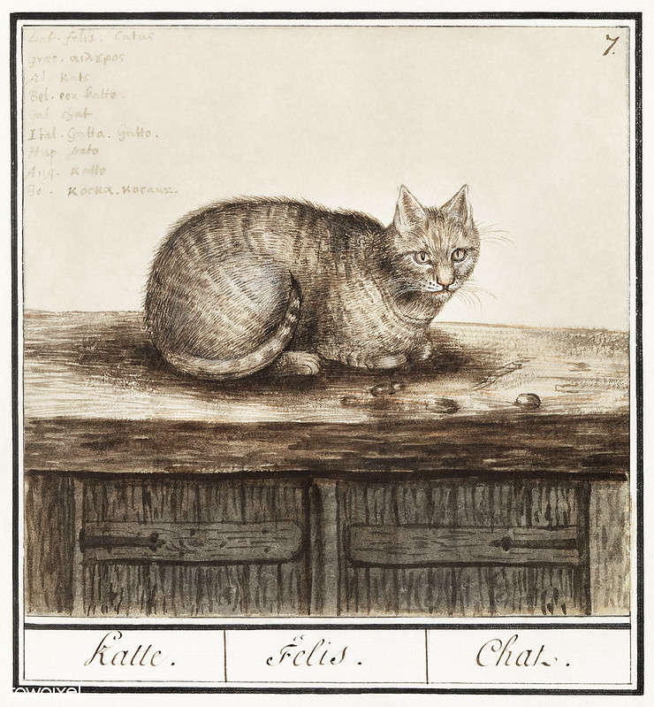 Cat in vintage style