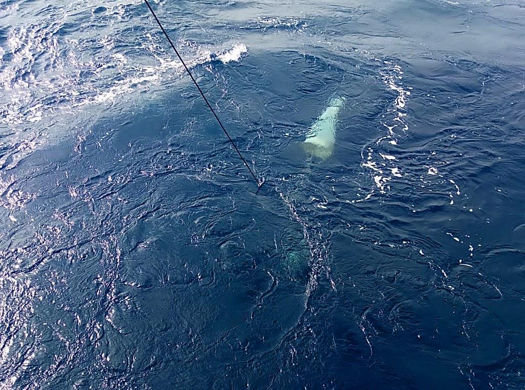 已放到海裡採集的浮游動物網。李彥輝攝。