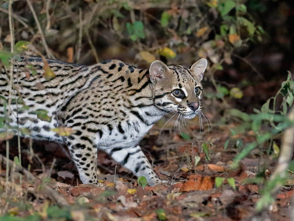Pantanal_1252