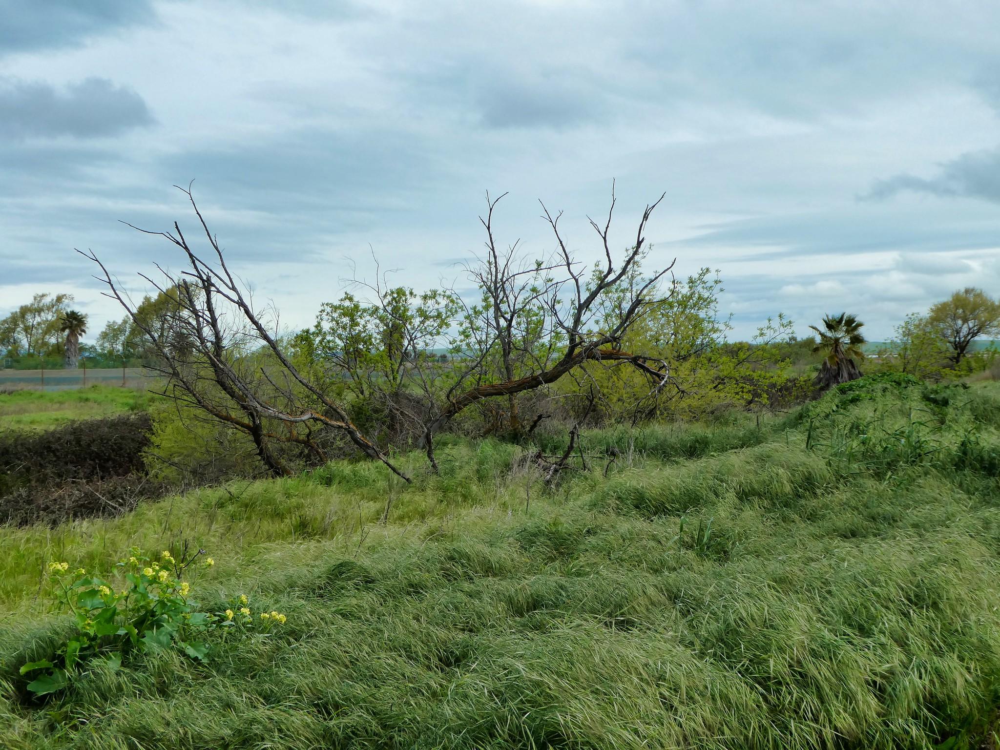 2019-04-04 - Outdoor Photography - Nature - Dow Wetlands