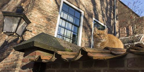 City cat - stadskat | by JoCo Knoop