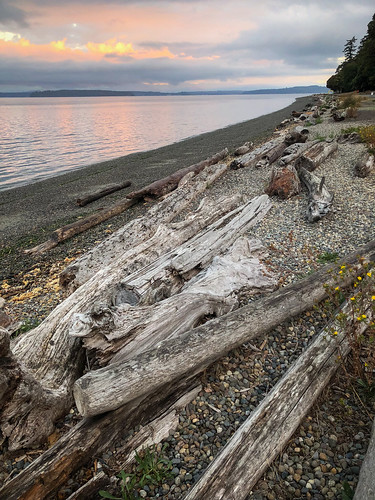 salish sea pacific ocean beach washington puget sound wa usa wander nature explore lincoln park seattle fauntleroy driftwood northwest sunrise log reflection