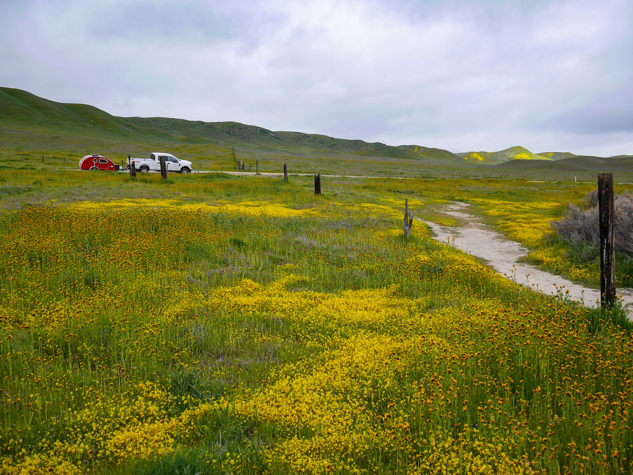 Carrizo Plain superbloom