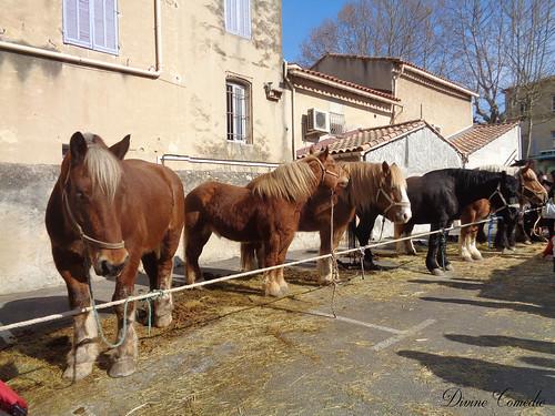 Auriol : 33e foire aux chevaux 2019