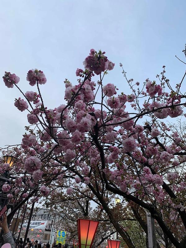 桜の通り抜けフィールドキャンパスを開催しました!
