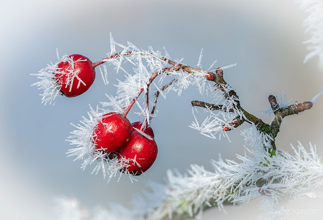 Mi, 2018-12-26 12:53 - Winter creates unique motifs that fascinate me every year anew!  Der Winter schafft einzigartige Motive, die mich jedes Jahr aufs Neue faszinieren!  Mehr über das Fotografieren von Eiskristallen gibts hier: www.makro-treff.de/makrofoto-ausgabe-4