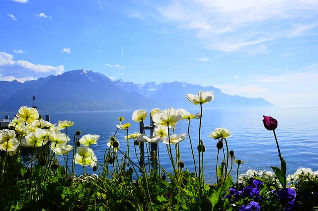 Der Genfersee im Frühling