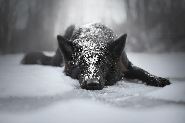 Winter melancholy