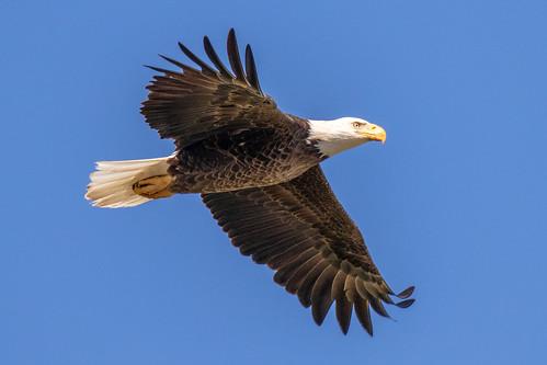 outdoor sky water nature wildlife 7dm2 ef100400mm ocean canon florida bird bif flight