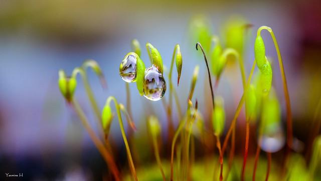 Macro Droplets - 6557