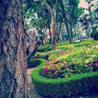 Squirrel | by Romel Eliseo