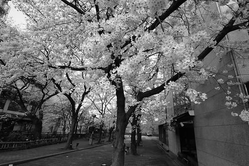 03-04-2019 Kyoto (39)