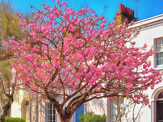"""Suburban Spring 