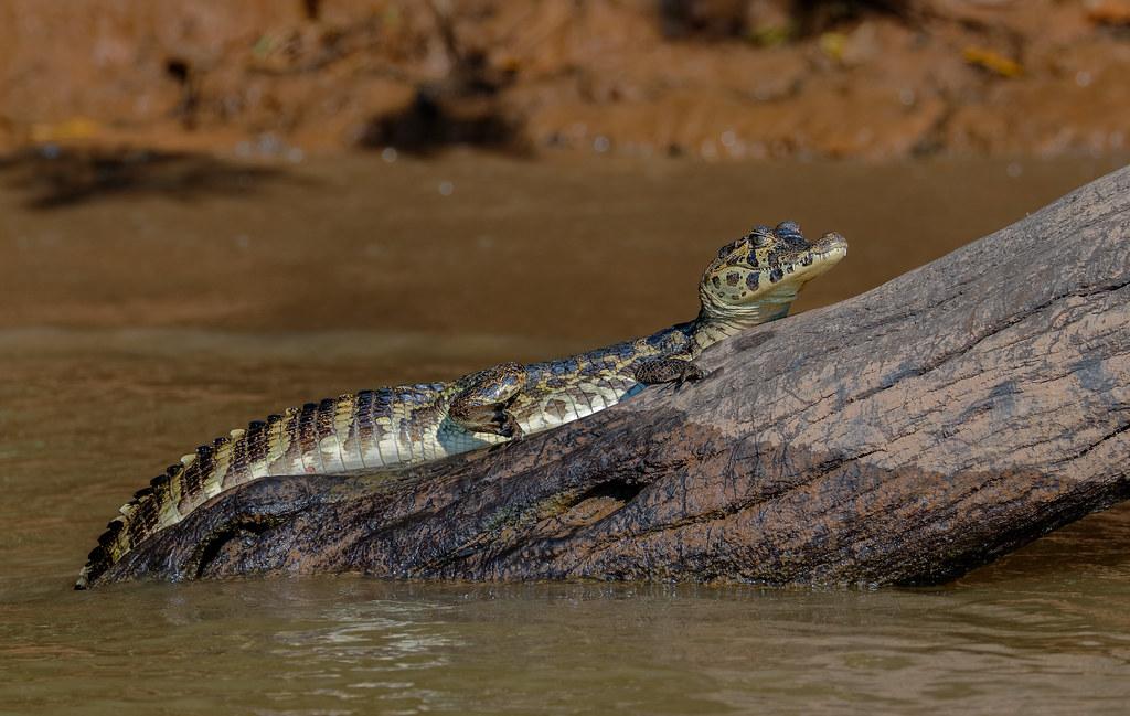 Pantanal_2434