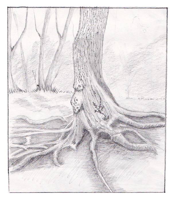 pencil drawing of tree roots