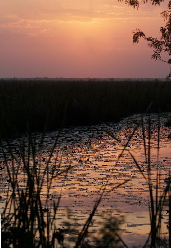 Sunrise Zapata marsh Ascanio_Cuba 199A5735