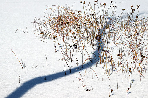 saltwater marsh wetland chesapeake bay grasses frozen landscape north point state park baltimore county maryland winter cbf