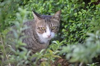 Cat Raum 11-24-17 2