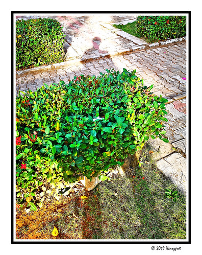 harrypwt huaweip20 p20 smartphone borders framed garden backyard maitama abuja nigeria africa afrika green plants leaves grass