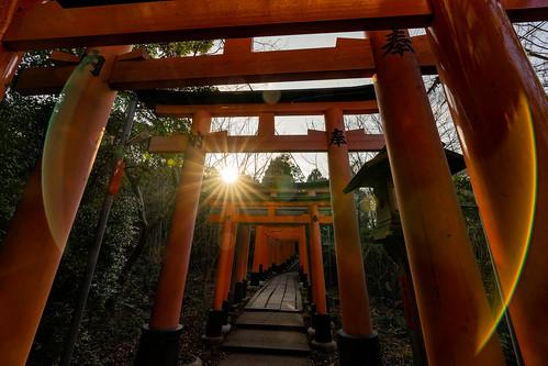 sunrise rising sun fushimiinaritaisha taisha fushimi inari torii toriigate sunburst starburst japan outdoor landscape landscapephotography a7m2 sonyalpha sony kyoto picoftheday photooftheday