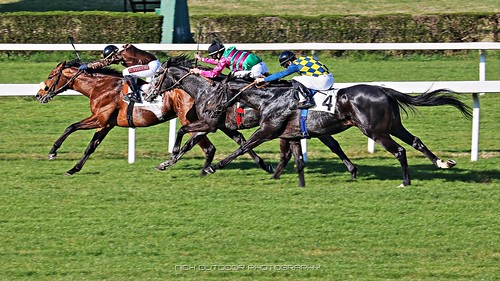 horseraces ippodromodimilano fotografiasportiva presley azzurrocobalto timetochoose giornatedelfai listedrace racecourse